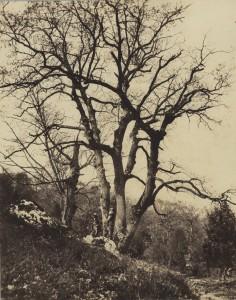 Constant Alexandre Famin - Forêt de Fontainebleau, ca 1868